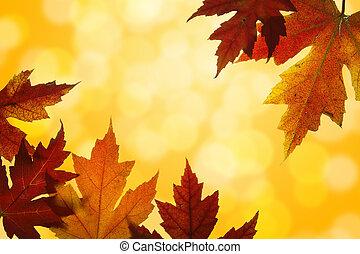 mescolato, foglie, retroilluminato, acero, colori caduta, autunno