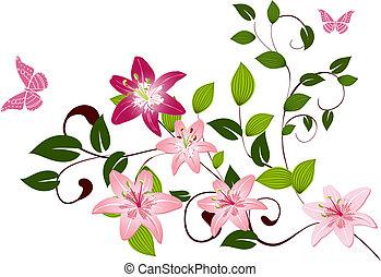 modello, gigli, fiore, ramo