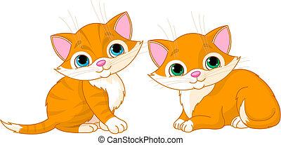 molto, carino, gatti, due