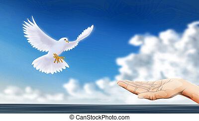 mondo, pacifico
