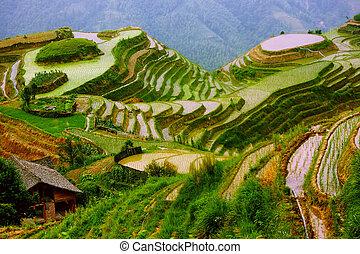 montaggio, yunnan, riso, porcellana, terrazzi