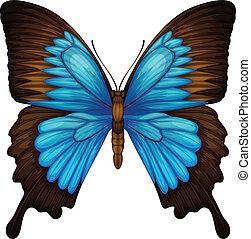 montagna blu, swallowtail