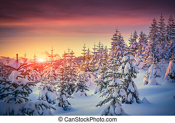 montagna, inverno, aurora colorita, paesaggio, foresta