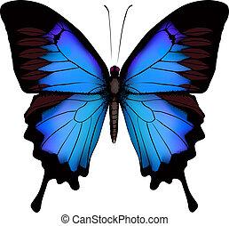 (mountain, sfondo blu, isolato, farfalla, ulysses, vettore, swallowtail), papilio, bianco