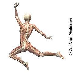 movimento, donna, anatomia, -, saltare