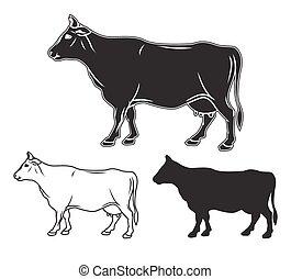 mucca, set., illustrazione, mano, vettore, disegnato