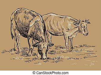 mucche, vettore, disegno, mano