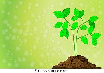 mucchio, sfocato, grows, pianta, bokeh., sporcizia, fondo, verde