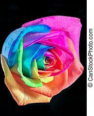 multicolor, rosa