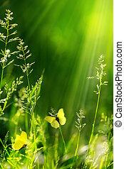 natura, floreale, fondo, astratto, estate, verde