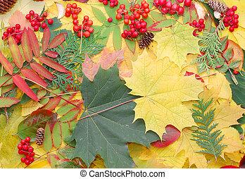 natura, foglie, -, autunno, fondo, cadere