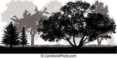 natura, parco, albero, silhouette, fondo, (forest)