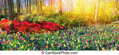 natura, primavera, multicolor, panoramico, flowers., fondo, paesaggio