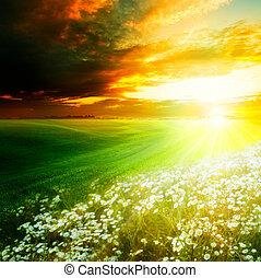 naturale, hills., luce, astratto, sfondi, mattina, luminoso, verde