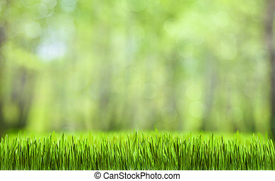naturale, primavera, astratto, foresta verde, fondo