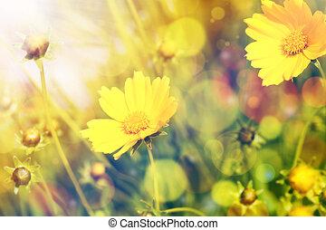 naturale, sopra, sole, sfondo giallo, fiori