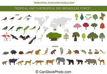 naturale, subtropicale, set, asciutto, vegetations, regione, ecosistema, biome, uccelli, infographic., forests., foresta tropicale, animali, stagionale, broadleaf, disegno