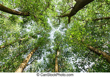nature., foresta