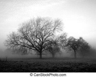 nebbia, fuori