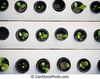 nero, affari, poco, pot., pianta, hydroponics, farm., verde, concept., agricoltura