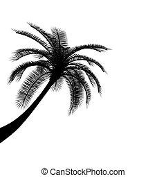 nero, bianco, palma