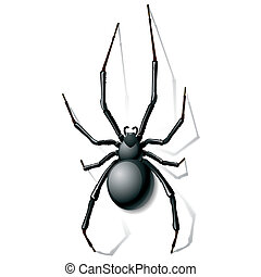 nero, ragno, vedova