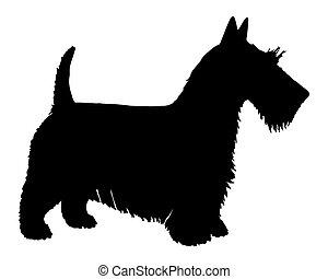 nero, terrier, silhouette, scozzese