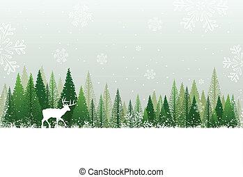 nevoso, foresta, fondo, inverno