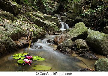 ninfea, cascata, foresta, piccolo