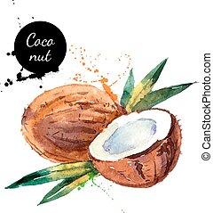 noce di cocco, mano, acquarello, frutta, fondo, disegnato, bianco, pittura