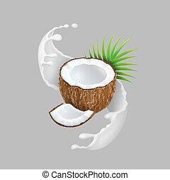 noce di cocco, naturale, illustration., frutta, realistico, vettore, splash., latte