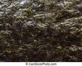 nori, secco, alga