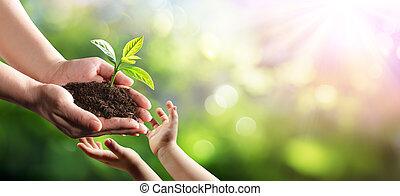 nuovo, pianta, giovane, ambientale, generazione, vecchio, dare, donna, bambino, protezione