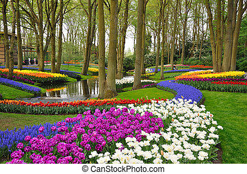 olanda, colorito, tulips, parco, azzurramento, keukenhof