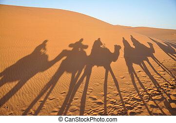 ombre, merzouga, marocco, cammelli, deserto sahara