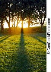 ombre, sole, regolazione, pezzo fuso, albero
