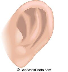 orecchio, illustrazione