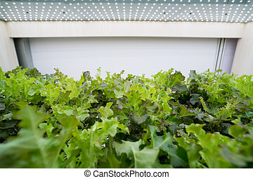 organico, hydroponic, fattoria, agricoltura, interno, verdura, tecnologia, crescere