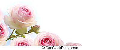 orizzontale, bandiera, pendenza, sopra, blu, rose, fiori, rosaio, fondo, rosa, bianco