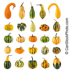 ornamentale, differente, venticinque, zucche