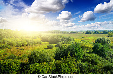 oro, sotto, sky., soleggiato, blu, giorno, foresta
