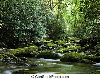 pacifico, sopra, fiume, fluente, pietre