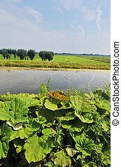 paesaggio, agricoltura