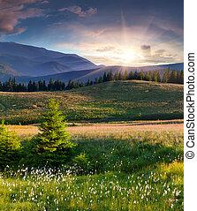 paesaggio, bello, penna, estate, erba, montagne