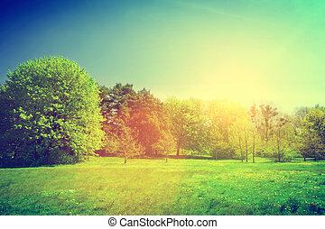 paesaggio., estate, soleggiato, verde, vendemmia