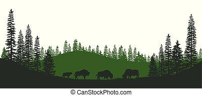 paesaggio., fauna, bison., naturale, panorama, scena, isolato, americano, foresta nera, silhouette, animals.