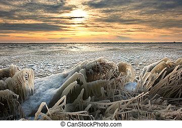 paesaggio, freddo, ghiaccio, canna, alba, inverno, coperto