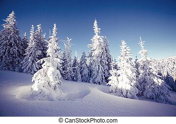 paesaggio, maestoso, inverno