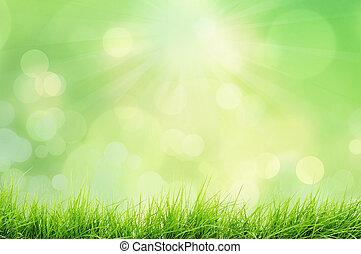 paesaggio, natura, erba