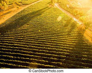 paesaggio., sopra, aereo, tramonto, cileno, vista, vineyard.